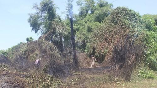 Công viên cháy dữ dội, khói mù mịt cả một vùng - ảnh 2
