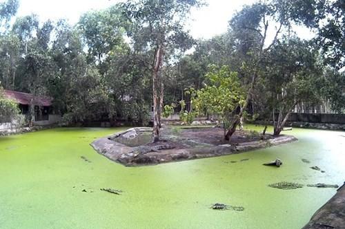 Bên trong trang trại nuôi cá sấu làm đồ da lớn nhất Sài Gòn - ảnh 1