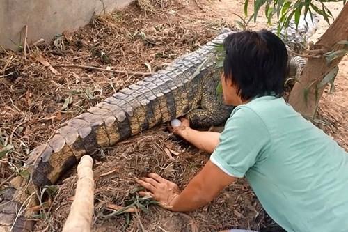 Bên trong trang trại nuôi cá sấu làm đồ da lớn nhất Sài Gòn - ảnh 2