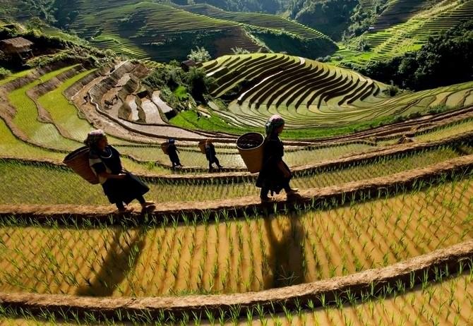 Nguồn ảnh: vietnamvisa-easy.com