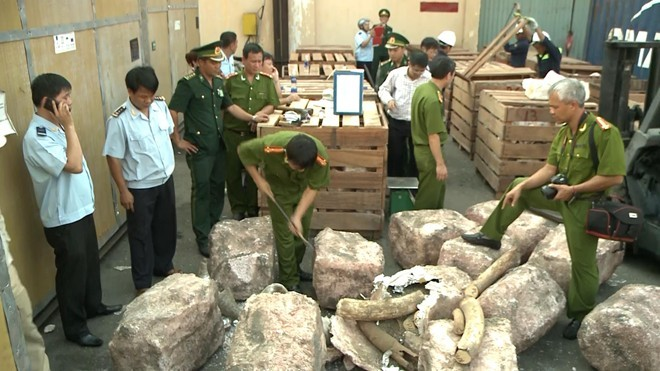 2 tấn ngà voi nhập lậu trong container gỗ trị giá trăm tỷ