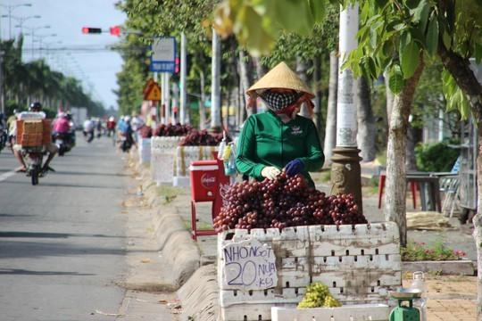 Giá nho bán ở lề đường chỉ từ 25.000-40.000 đồng/kg, thấp hơn nhiều lần so với nho Mỹ thật