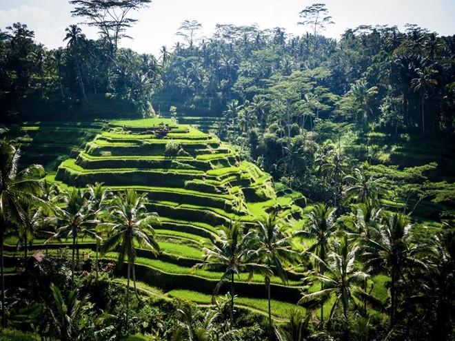 Nhiều du khách cho rằng cách tốt nhất để trải nghiệm một nơi bình yên như Ubud, Bali, là đi một mình. Như thế, bạn sẽ có cơ hội ngắm nhìn những ruộng lúa, rừng khỉ thiên. Đây cũng là một trong những địa điểm spa nổi tiếng nhất thế giới. Đừng bỏ lỡ cơ hội nuông chiều bản thân khi tới Bali.