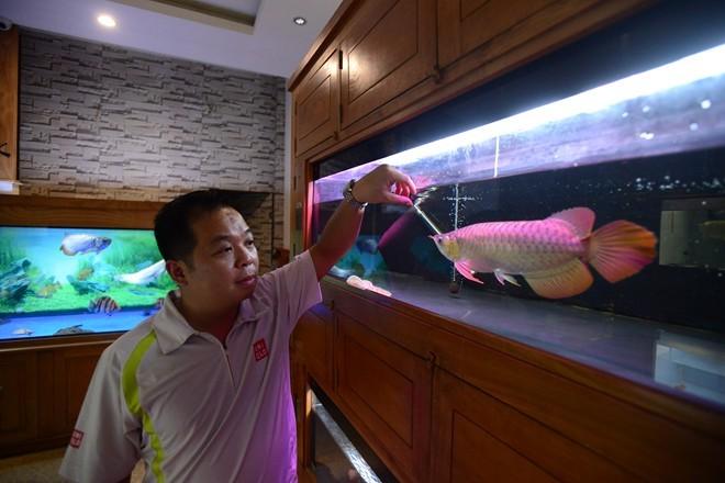 Chi tiền săn cá kim long 9999 có 'giấy khai sinh'