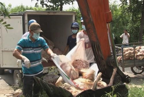 Tiêu hủy 1,5 tấn thịt bản không rõ nguồn gốc. Ảnh: Long Hồ
