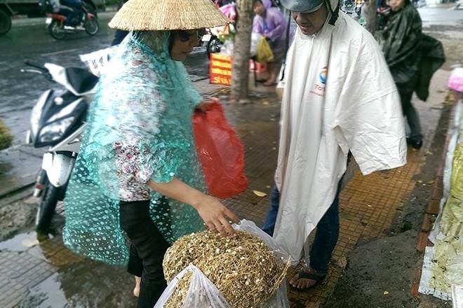 Cây bụi vùng quê thành 'thần dược' trên phố Sài Gòn