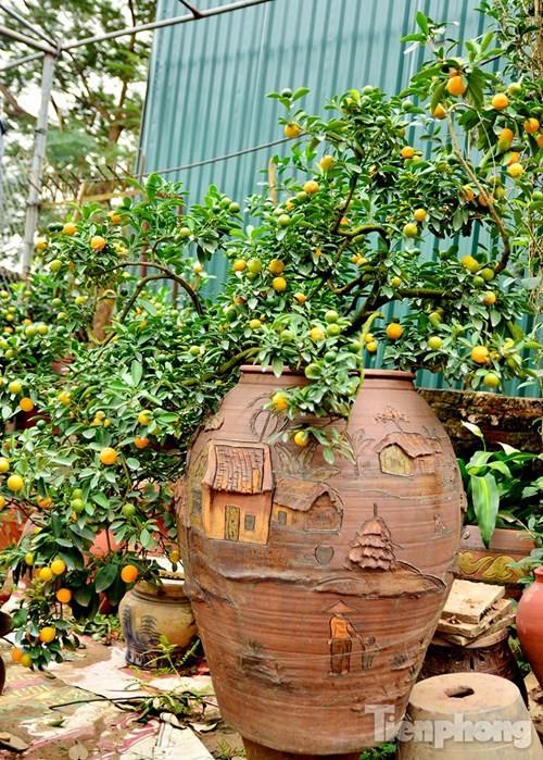 Hàng độc quất bonsai giá chục triệu cho thuê chơi Tết - ảnh 11