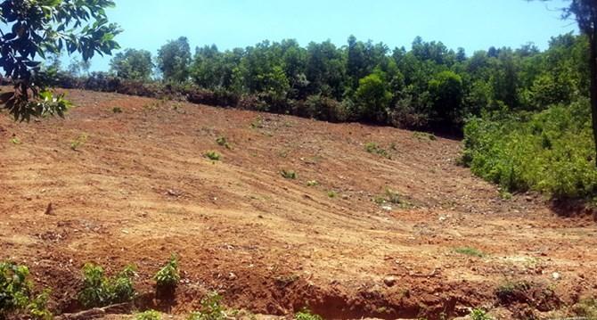 Đà Nẵng: Địa phương không vội nhận bàn giao đất rừng đặc dụng Hải Vân