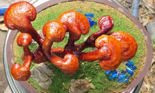 linh-chi-bonsai-chuc-trieu-trung-tet-hut-khach-1