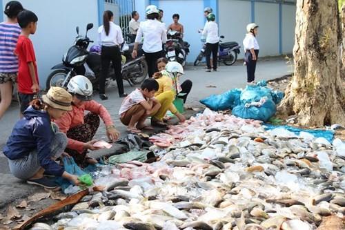 Cá bè chết hàng loạt ở Đồng Nai là do thiếu ôxy - ảnh 1