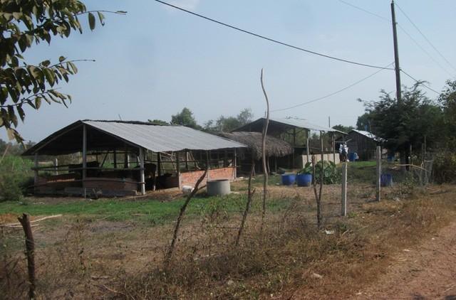 Chuồng trại chăn nuôi trâu bò của người dân. Hàng ngày, họ chăn thả bên trong khu dự án để tận dụng nguồn cỏ xanh có sẵn.