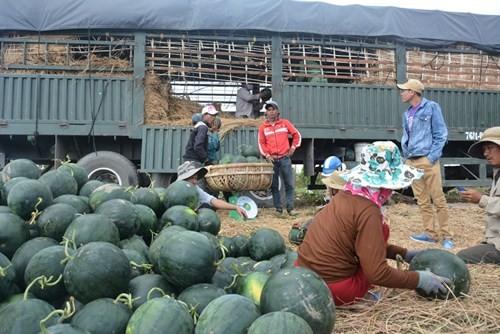Nông dân chỉ thu lại được khoảng 20% tiền đầu tư