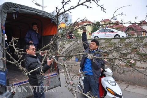 Cành lê rừng được anh Trường bán cho một khách ở đường Xuân Thủy, quận Cầu Giấy, Hà Nội với giá trên 2 triệu đồng.