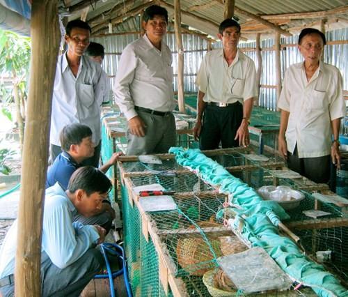 Nhiều người đến học hỏi kinh nghiệm nuôi bồ câu của ông Tần (bìa phải) - Ảnh: Trần Thanh Phong