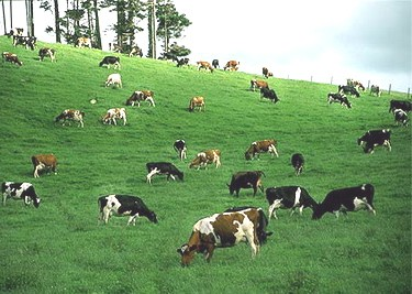 'Đánh tráo' sữa bột - sữa tươi: Người tiêu dùng 'hứng' cả - Ảnh 3