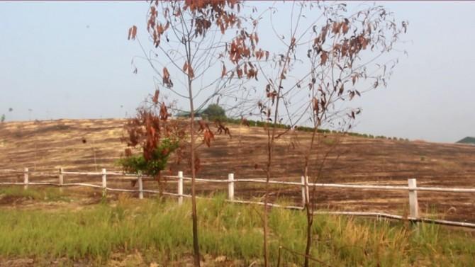 Cây cối trơ trụi, một vài cây cảnh trồng nham nhở chết khô từ lâu.