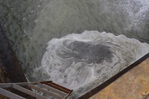 Lương nước thải chưa qua xử lý đổ ra sông Bưởi là nghi vấn dẫn đến tình trạng cá chết hàng loạt.