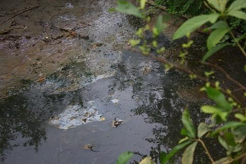 Nước thải của công ty mía đường Hòa Bình đọng lại ở con mương dẫn ra sông Bưởi màu đen kịt, bốc mùi hôi thối nồng nặc.