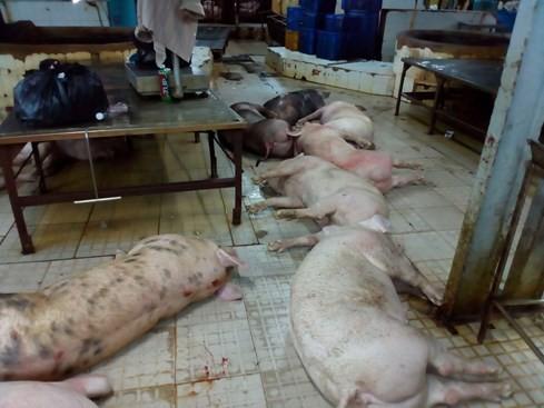 Bơm nước bẩn 623 con heo để xẻ thịt bán tại Sài Gòn - ảnh 3