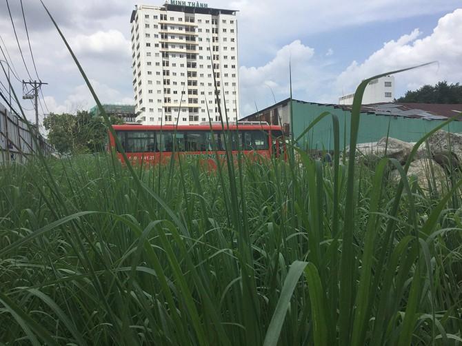 Đại diện công ty Phương Trang cho biết khi thị trường BĐS đang nóng nhưng công ty không thể triển khai được gì trên những khu đất này là sự thiệt hại lớn.
