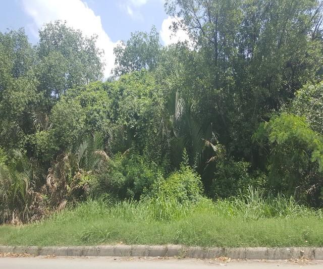 Chạy dọc theo tuyến đường Nguyễn Văn Linh, bao quanh cả khu đất của dự án là cây cối như một khu rừng rậm.