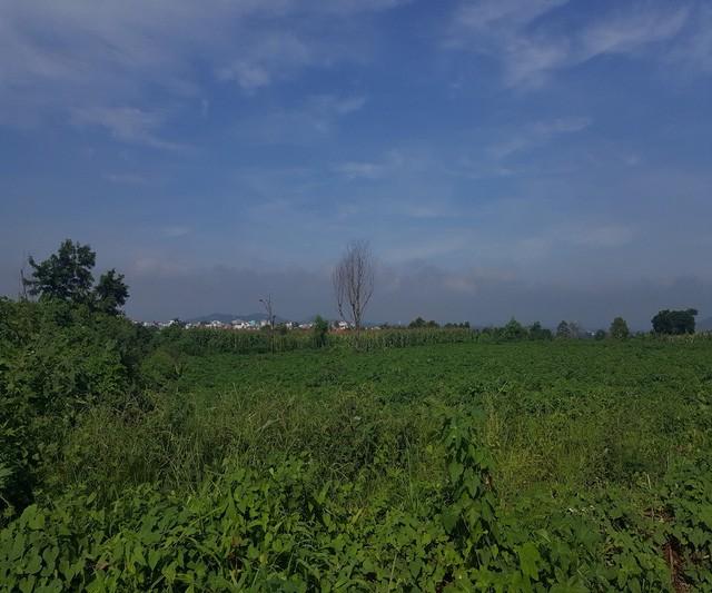 Khu đất bao la cây dại vẫn không được đầu tư
