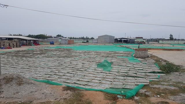 Đàn ông ở Cà Ná thì bám ngư trường, phụ nữ và trẻ con ở nhà phơi cá bán cho những nhà máy thuỷ sản xung quanh
