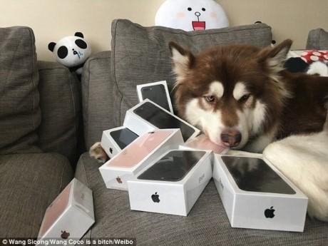 Thieu gia Trung Quoc 'choi ngong' mua 8 chiec iPhone 7 cho cho cung - Anh 2