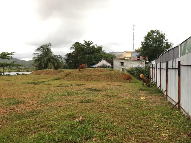Khu đô thị nghỉ dưỡng cao cấp biến thành nơi chăn bò