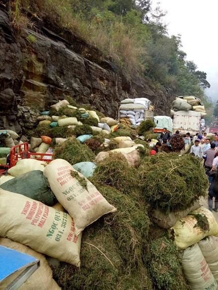 Sự thật sau tin đồn thương lái Trung Quốc ồ ạt mua gom cây thông đất ảnh 1