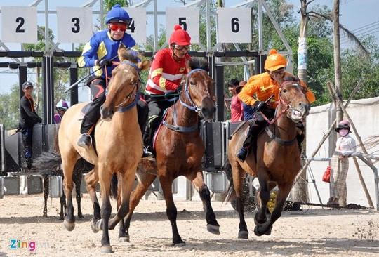 Các chủ ngựa tập luyện hàng ngày tại sân tập của trường đua phục vụ cho cho giải đầu tiên tổ chức cuối tháng 12. Ảnh: Võ Tài.