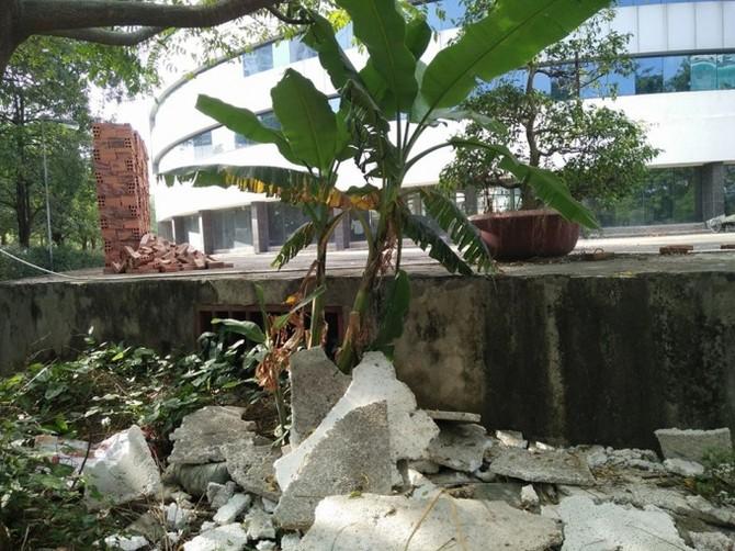 Trong khuôn viên bệnh viên, cỏ dại mọc um tùm, bốc mùi khó chịu và có rất nhiều muỗi.