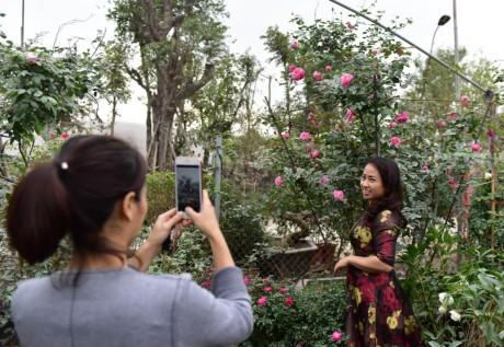 Hoa hong Thai Lan, Sa Pa gia hang chuc trieu choi Tet - Anh 6