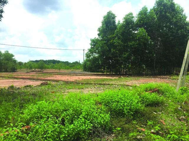 Các lô đất trước bãi thả trâu được rao giá rất cao, người mua không nghiên cứu kỹ sẽ nhận rất nhiều rủi ro.