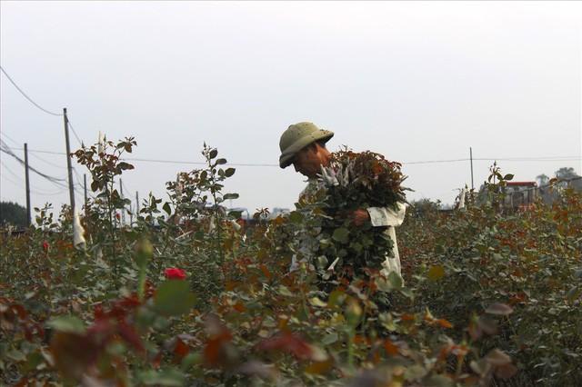 Làng hoa Tây Tựu trầm lắng dù cận ngày Quốc tế Phụ nữ 8.3 - Ảnh 1.