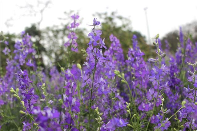 Làng hoa Tây Tựu trầm lắng dù cận ngày Quốc tế Phụ nữ 8.3 - Ảnh 2.