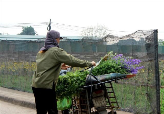 Làng hoa Tây Tựu trầm lắng dù cận ngày Quốc tế Phụ nữ 8.3 - Ảnh 11.