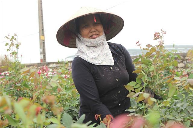 Làng hoa Tây Tựu trầm lắng dù cận ngày Quốc tế Phụ nữ 8.3 - Ảnh 4.