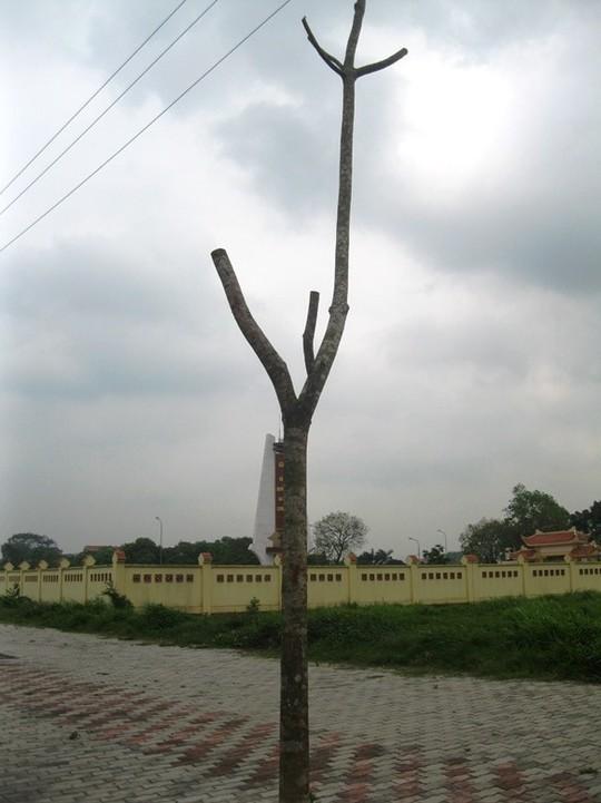 Rất nhiều cây chết khô ở hai bên đường 5 kéo dài
