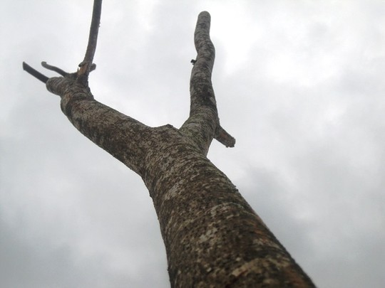 Những cành cây không khác cành củi khô