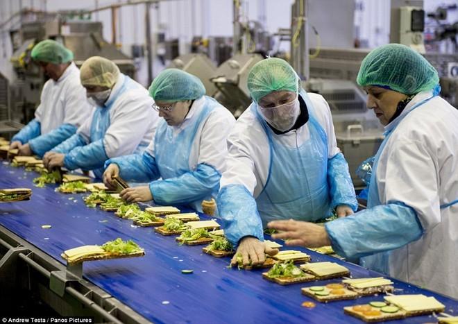 Bên trong nhà máy bánh sandwich lớn nhất nước Anh