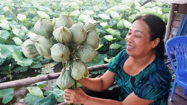 Bà Hợp quảng cáo bán bông sen đã được ướp trà bên trong với giá 25.000 đồng/bông.