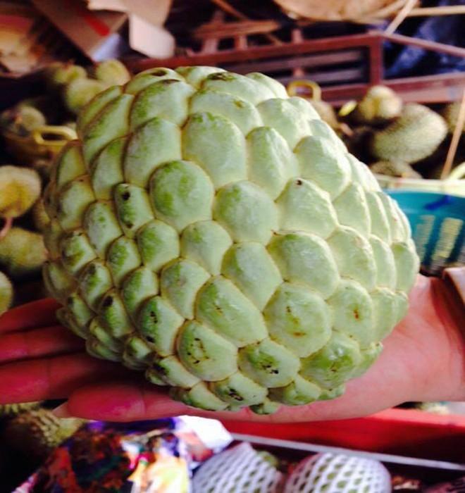 Giá đắt gấp 3 lần, na Thái 1 kg vẫn được tìm mua