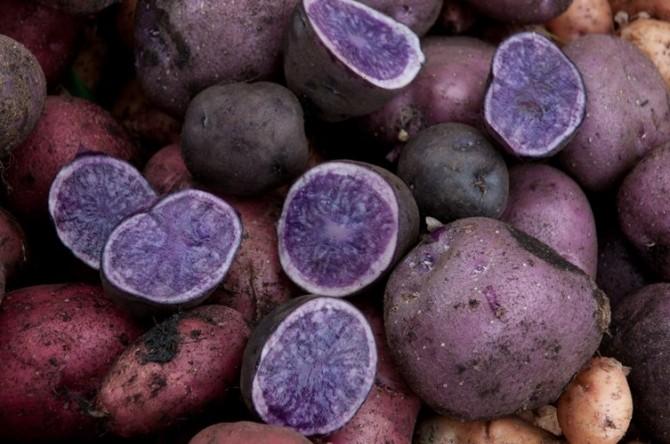 Khoai tây tím độc lạ khiến người Hà Nội