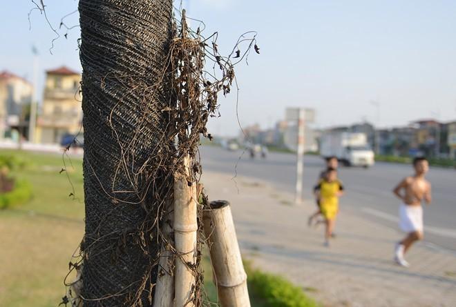 Cây mới tiếp tục chết khô trên cao tốc nghìn tỷ