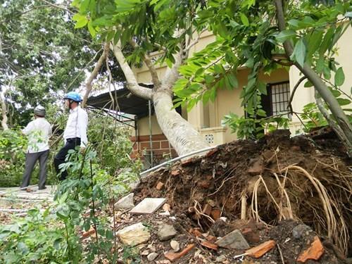 Lốc xoáy kinh hoàng, hàng trăm hộ thuê bao bị mất kết nối internet - ảnh 8