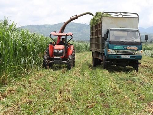 Máy cắt, nghiền cỏ tự động của HAGL