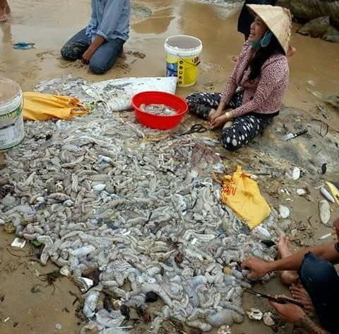 Hải sâm được thu gom và rao bán - Ảnh: Lê Khoa