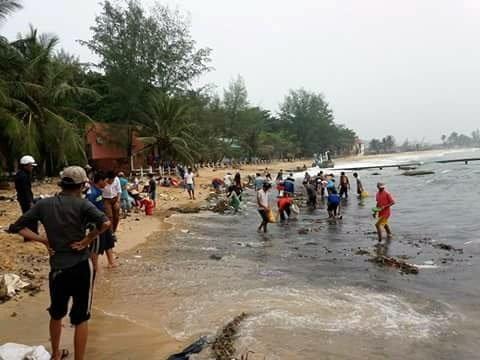 Người dân kéo ra bãi biển thu lượm hải sâm - Ảnh: Thảo Ly