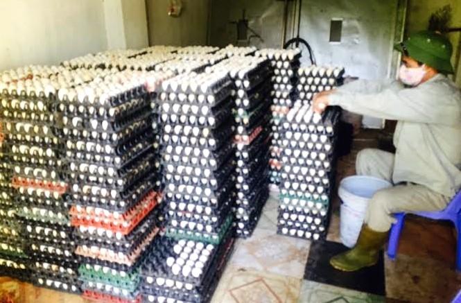 Ông trùm nuôi gà đẻ trứng, xã Thanh Vân, Bùi Quốc Việt, Vĩnh Phúc, gà Ai Cập, thủ phủ gà đẻ, ông-trùm-nuôi-gà-đẻ-trứng, xã-Thanh-Vân, Vĩnh-Phúc, gà-Ai-Cập, thủ-phủ-gà-đẻ, Bùi-Quốc-Việt, gà-đẻ-trứng